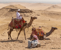 2 camel drivers